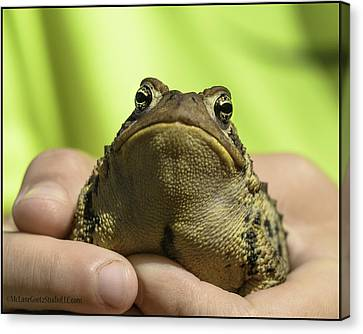 Amphibians Canvas Print - Michigan Toad That Almost Got Away by LeeAnn McLaneGoetz McLaneGoetzStudioLLCcom
