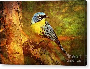 Warbler Canvas Print - Michigans Rare Kirtlands Warbler by Lianne Schneider