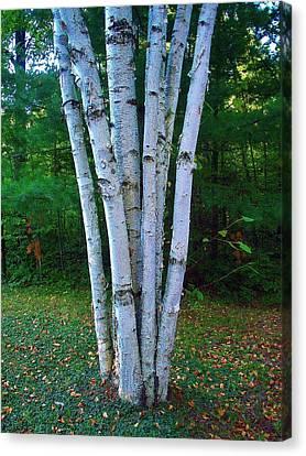 Canvas Print featuring the photograph Micro-grove by Daniel Thompson