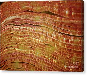 Microbiology Canvas Print - Microscopic View Of Nerve Fibers by Stocktrek Images