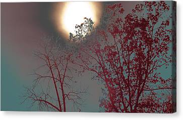 Mid-afternoon Sun Canvas Print
