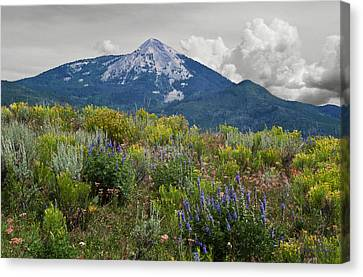 Mid Summer Morning Canvas Print by Daniel Hebard