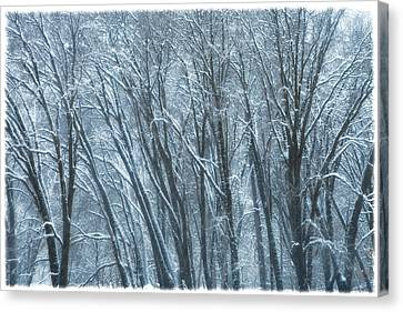 Canvas Print featuring the photograph Mid-winter Storm by Jonathan Nguyen
