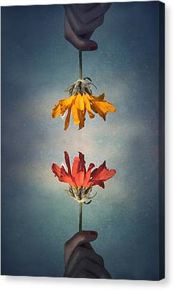 Flower Art Canvas Print - Middle Ground by Tara Turner