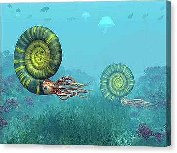 Middle Jurassic Ammonites Canvas Print by Walter Myers