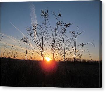 Middle Of The Field Sunrise Canvas Print by Tina M Wenger