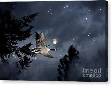 Midnight Flight Canvas Print
