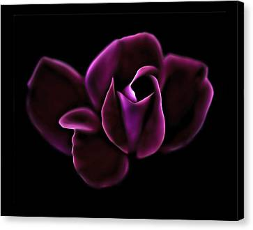 Midnight Knockout Rose Canvas Print