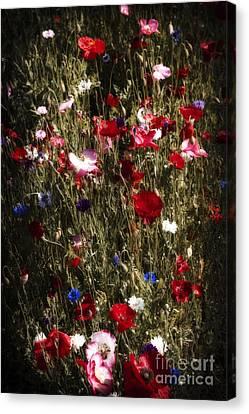 Midnight Poppies Canvas Print by Elena Elisseeva