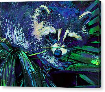 Midnight Racoon Canvas Print by Jane Schnetlage