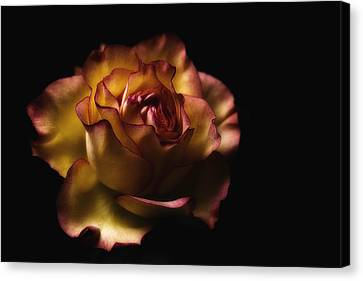 Midnight Rose Canvas Print