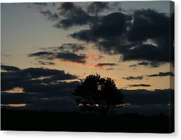 Farm Pasture Midnight Sun  Canvas Print by Neal Eslinger