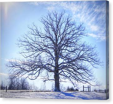 Mighty Oak In Winter Canvas Print by Cricket Hackmann