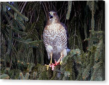 Canvas Print featuring the photograph Mighty Raptor by Gene Walls