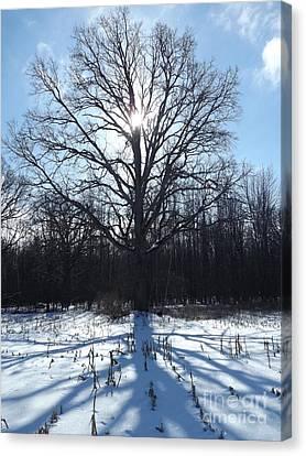 Mighty Winter Oak Tree Canvas Print