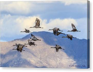 Canvas Print featuring the photograph Migration by Beverly Parks