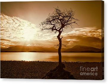 Milarochy Bay Tree Loch Lomond Canvas Print by John Farnan