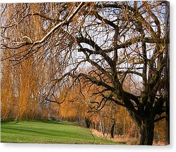 Canvas Print featuring the photograph Mild Winter In Mayesbrook Park - Dagenham by Mudiama Kammoh