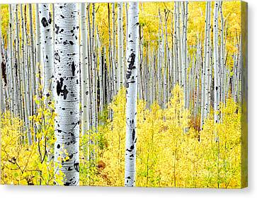 Miles Of Gold Canvas Print by The Forests Edge Photography - Diane Sandoval