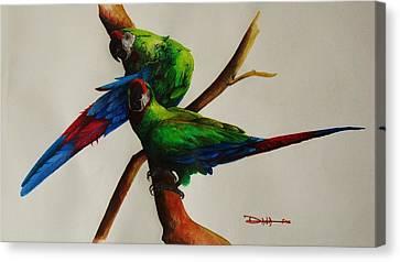 Military Macaws Canvas Print by Dana Newman