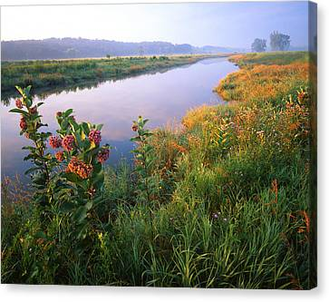 Milk Weed Morning Canvas Print by Ray Mathis