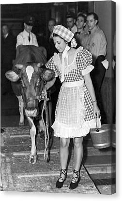 Milking Cow In New York Hotel Canvas Print by Underwood Archives