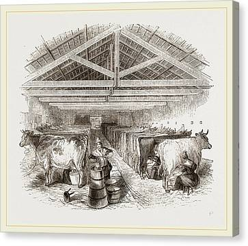 Milking-shed Canvas Print