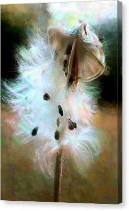 Milkweed Pod Canvas Print