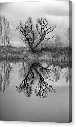 Mill Pond Tree Canvas Print