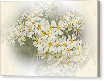 Millicent Canvas Print by Elaine Teague