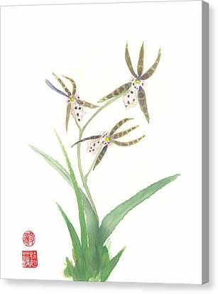 Miltonia Orchid Canvas Print