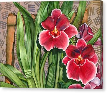 Miltonia Orchids Canvas Print