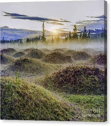 Mima Mounds Mist Canvas Print