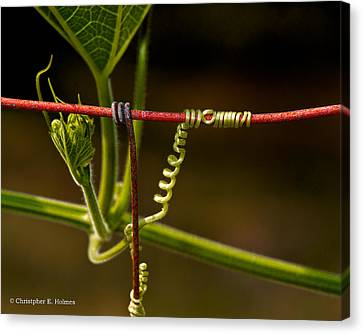 Mimic Canvas Print by Christopher Holmes