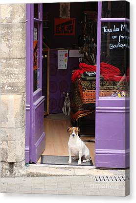 Canvas Print featuring the photograph Minding The Shop. Two French Dogs In Boutique by Menega Sabidussi