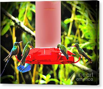 Mindo Hummer Gathering Canvas Print by Al Bourassa
