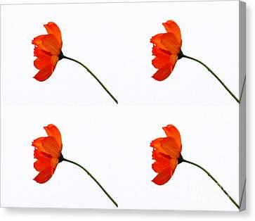 Mini Daisy Four Canvas Print by Tina M Wenger