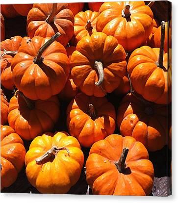 Mini Fall Pumpkins Canvas Print by Denyse Duhaime