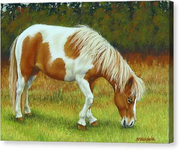 Canvas Print featuring the pastel Mini Mare Pastel by Margaret Stockdale
