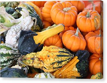 Canvas Print featuring the photograph Mini Pumpkins And Gourds by Cynthia Guinn