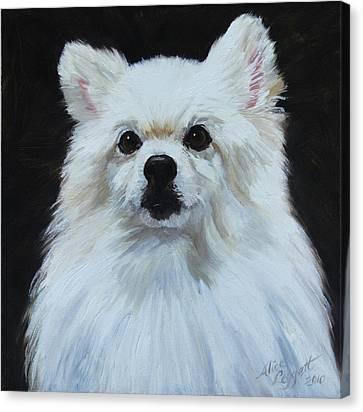 Miniature American Eskimo Dog Canvas Print