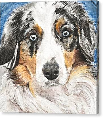 Miniature Australian Shepherd Canvas Print