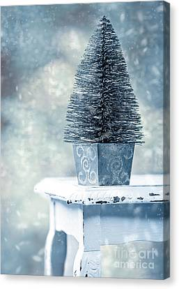 Dappled Light Canvas Print - Miniature Christmas Tree by Amanda Elwell
