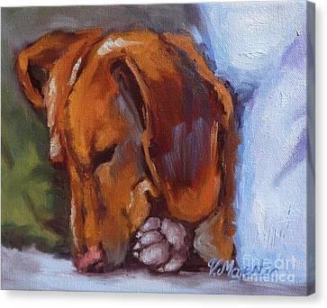 Miniature Dachshund Dog - Doxin Canvas Print