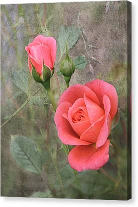 Miniature Roses Canvas Print by Angie Vogel