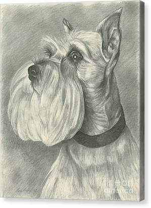 Miniature Schnauzer Canvas Print by Lena Auxier