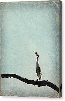 Minimalist Vintage Inspired Green Heron On Pale Blue Sky Canvas Print by Brooke T Ryan