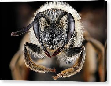 Mining Bee Canvas Print