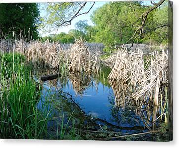 Minnesota Wetland Canvas Print by Jim Hughes