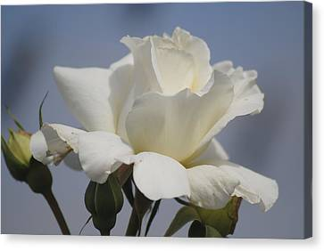 Minnie's Rose 2 Canvas Print